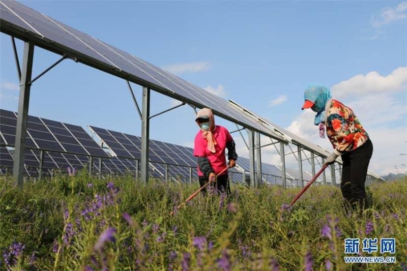 「農業・太陽光相互補完」産業パークが発展―河北省平泉市