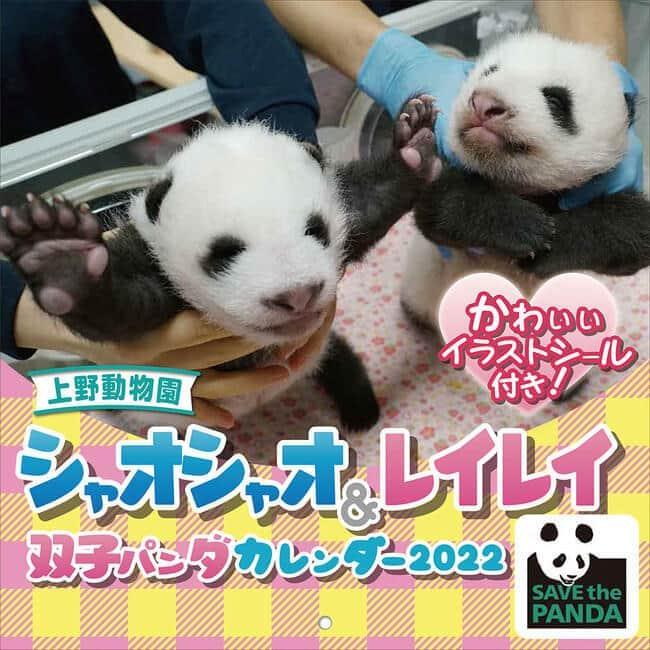 上野動物園の双子パンダをデザイン シャオシャオ&レイレイのカレンダー